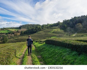 Young man walking on footpath through tea plantation rows belong to Gorreana tea factory Cha Gorreana and ocean on horizon. The oldest, and only, tea plantation in Europe, Sao Miguel island, Azores