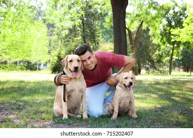 Young man walking with yellow retrievers in park