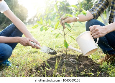 young man and woman plant a tree in forest outdoor action for good evieronment