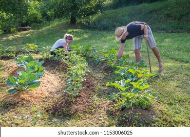 Young man and woman Working in a Home Grown Vegetable Garden