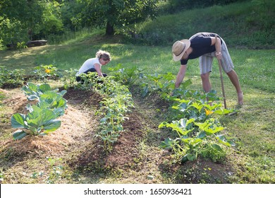 Young man and woman Working in a Home Grown Vegetable permaculture Garden