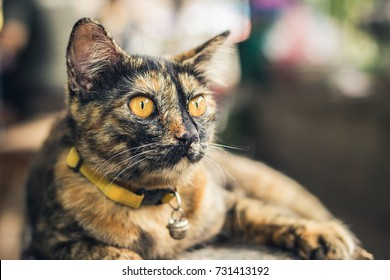 Young, marbled gold and brown cat sitting on a bench looking in the distance.