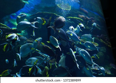 young men in aquarium feeding food to bunch of fishes in Ocean World aquarium in bangkok city ,thailand ,9th february 2019