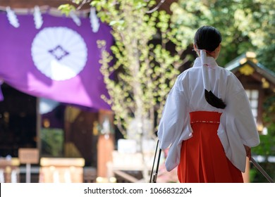 Young Miko in a Shinto shrine in Tokyo on  a clear morning in Spring. A Miko is a shrine maiden or a supplementary priestess trained to perform sacred tasks in Japan.