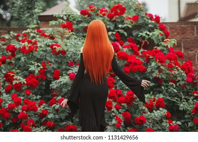 Young miraculous gothic girl with in black dress on dark background. Redhead pale model on background of roses bush. Stylish miraculous woman. Fashionable gothic clothes. Outfit for halloween. Back