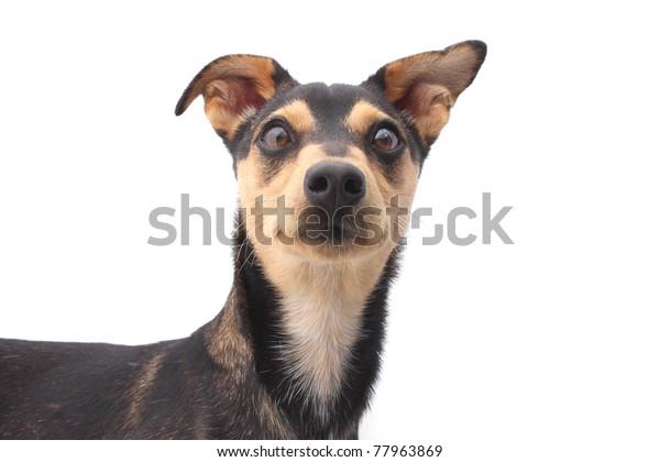 Young mixed breed dog