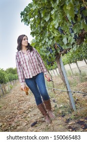 Young Mixed Race Female Farmer Inspecting the Wine Grapes in the Vineyard.