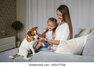 Young mom with her daughter playing with Jack Russell Terrier dog. Family and pet at home.