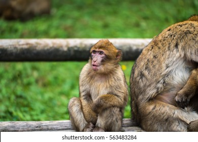 A young monkey sitting next to her mother