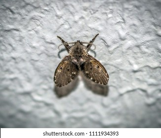 young moth on the wall