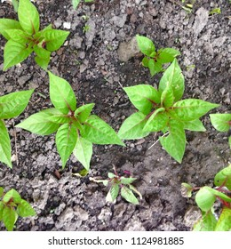 Young new plants growing in garden