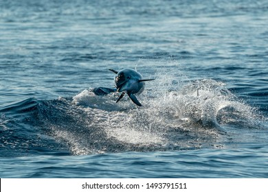 young newborn baby happy striped dolphin jumpin at sunset