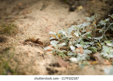 A young newborn poisonous viper basking on sand close to plants