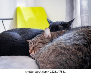 Young and old cat sleeping side by side