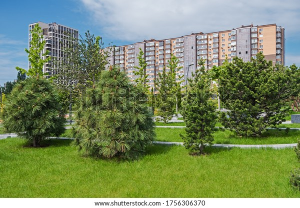 young-ornamental-trees-courtyard-garden-