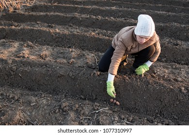 Young peasant woman planted potatoes on her home plot. Spring is working in the garden. Warm soil, earth, sowing works. There is space for text