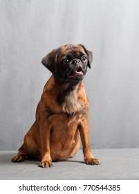 young pedigree dog