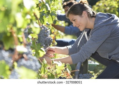 Young people in vineyard during harvest season