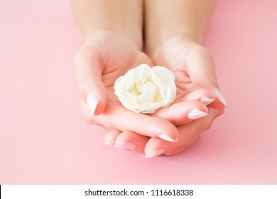 Young, perfect woman's hands with white rose on pastel pink table. Care about nails and clean, soft, smooth skin. Manicure, pedicure beauty salon. Beautiful, fresh flower.