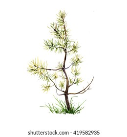 young pine and grass drawing by watercolor, aquarelle sketch of wild nature, isolated forest element,  painting conifer tree, hand drawn art illustration