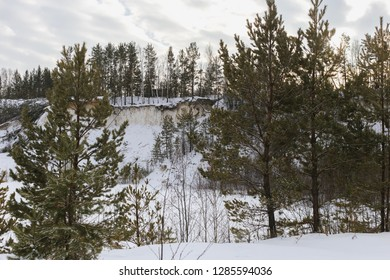 Young pines growing on a cliff kaolin career,  forest covered with snow