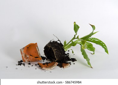 Young plant in a broken flower pot against white background