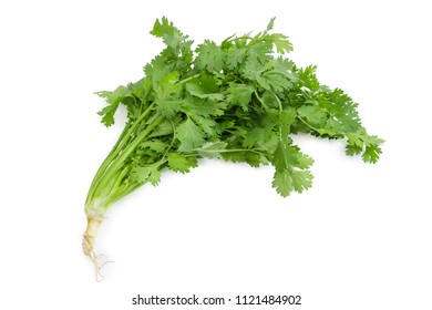 Young plant of cilantro with stalks, leaves and root on a white background