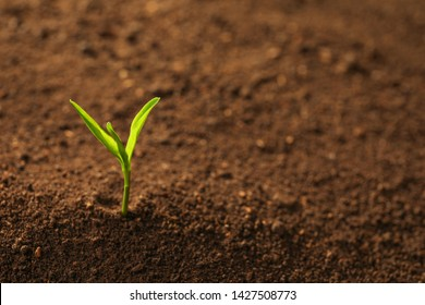 Young plant in fertile soil, space for text. Gardening time
