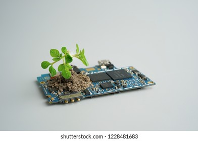 Young plant growing in circuit board.Technology blend with nature.
