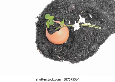 Young plant growing in egg shell  tree With flowers Isolated on white background