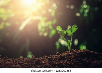 young plant growing in garden with sunlight