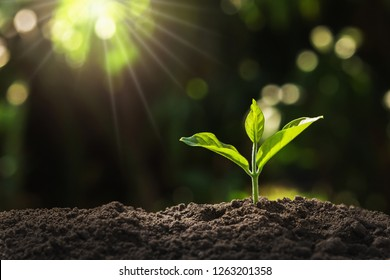 young plant growing in garden with sunlight - Shutterstock ID 1263201358