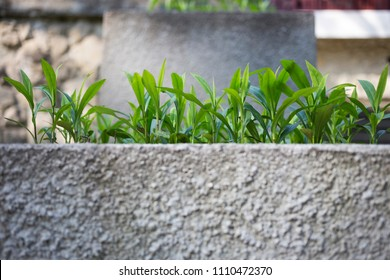 Young Plant Growing go to the Sunlight. Fareground and background is blurred.