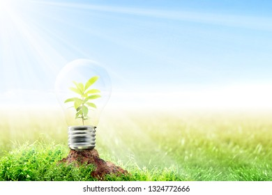 Young plant growing inside light bulb on fertile soil in meadow with sunlight and blue sky background. Earth day concept