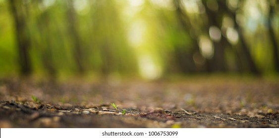 Young plant growing in the morning light and green nature - forest or park bokeh background , new life growth ecology business financial concept ,Earth Day. selective focus