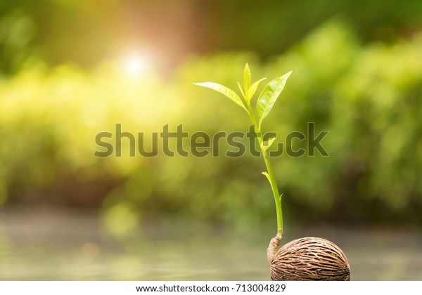 Young Plant Growing Morning Light Green Stock Photo (Edit