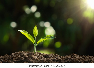 young plant growing in nature and morning light. concept earth day