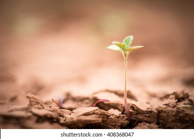 Young plant growing up on crack earth, Global warming theme green grass rising on burned cracked ground