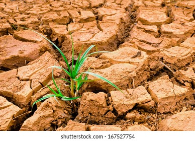 Young plant growing on dry earth