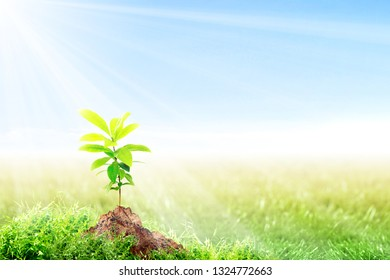 Young plant growing on fertile soil in meadow with sunlight and blue sky background. Earth day concept