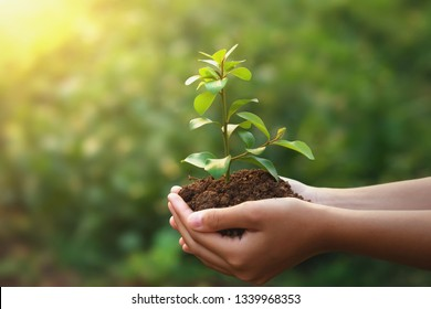 young plant growing on hand with green nature background. eco concept earth day