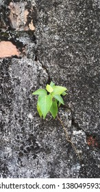 Young plant growing on an old brick wall. Peeling & cracking paint background