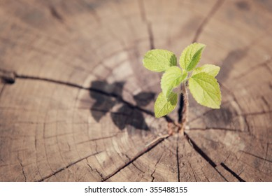 young plant growing on tree stump vintage