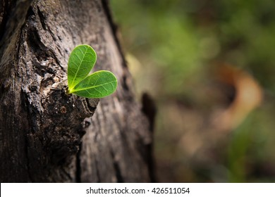 Young Plant growing on the tree,Growing concept.