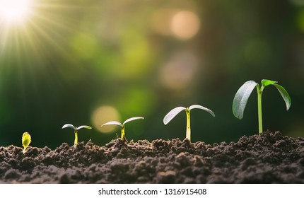 young plant growing step in garden with sunlight. eco concept