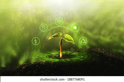 Young  plant growing at sunlight. Environment and ecology concept. Sources for renewable, sustainable development.