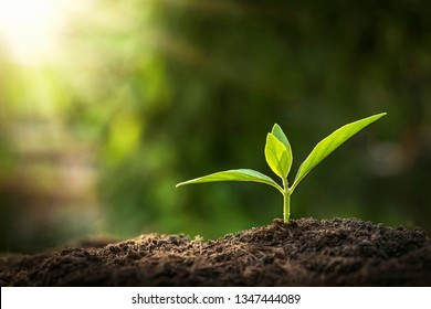 young plant growing with sunshine in nature