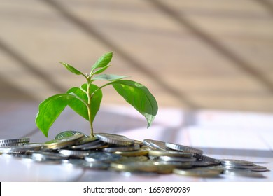 young plant growing through coins, investment, close up