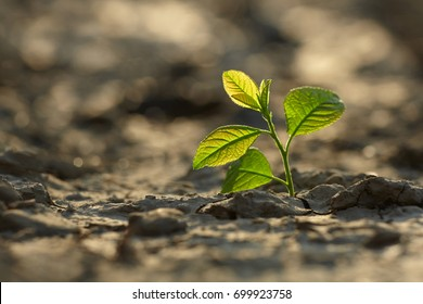 young plant growing through the ground, hope concept