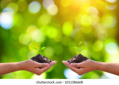 Young plant in hand. The seedling are growing in the soil with the backdrop of the light of the sun. /Wherever the tree is planted,everyone will benefit from it. The worldwide platform.